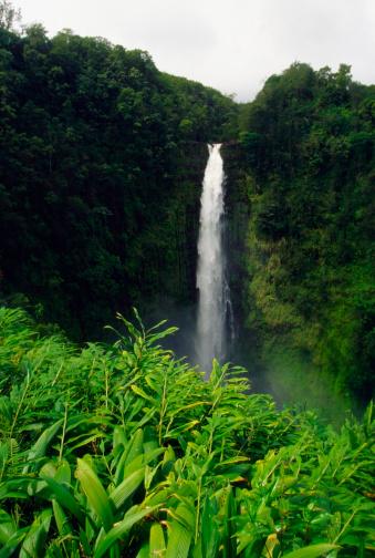 Akaka Falls「Waterfall in Akaka Falls State Park, Big Island, Hawaii, USA」:スマホ壁紙(11)