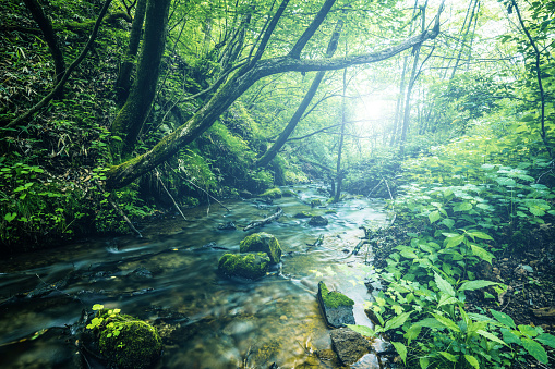 Forest「Waterfall in Karuizawa, Japan」:スマホ壁紙(19)