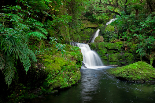 Lush Foliage「Waterfall in the rainforest, New Zealand」:スマホ壁紙(8)