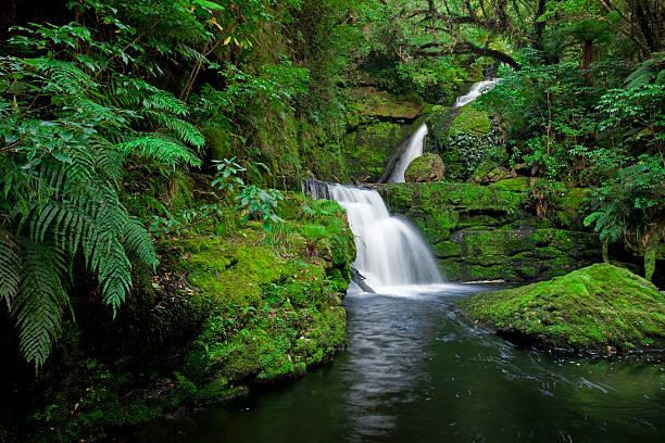 Waterfall in the rainforest, New Zealand:スマホ壁紙(壁紙.com)