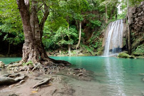 Waterfall「waterfall in tropical rainforest」:スマホ壁紙(8)