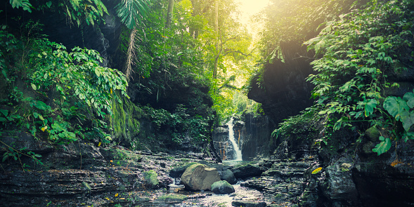 Stream - Flowing Water「Waterfall in a tropical forest」:スマホ壁紙(19)