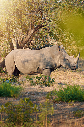 Reserve Athlete「Rhinos are temperamental」:スマホ壁紙(15)