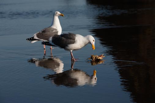 Cannon Beach「Seagulls and a crab」:スマホ壁紙(16)