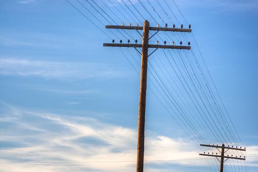 Telephone Pole「Obsolete telephone lines」:スマホ壁紙(10)