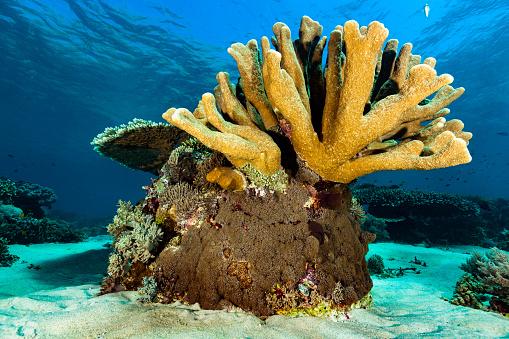 Soft Coral「Pristine Hard and Soft Coral Garden, Gili Lawa Darat, Komodo Nationalpark, Indonesia」:スマホ壁紙(14)