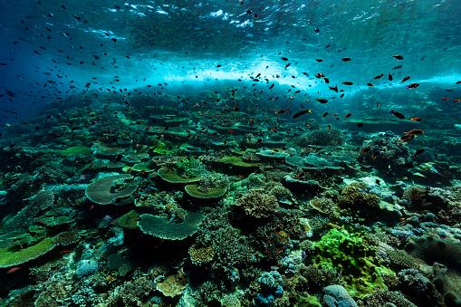 Shallow「Pristine Hard Coral Reef, Anthias Paradise, Komodo National Park, Indonesia」:スマホ壁紙(9)