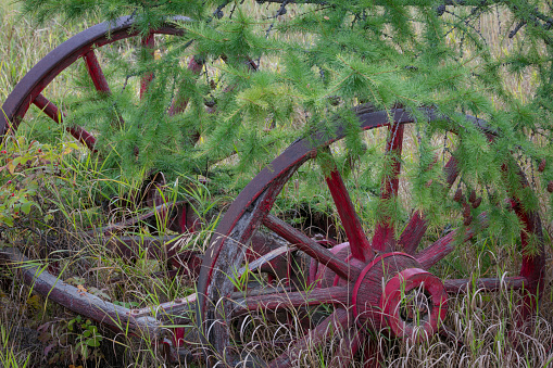 小枝「Old wagon wheels in grass, Yukon Territory, Canada」:スマホ壁紙(17)