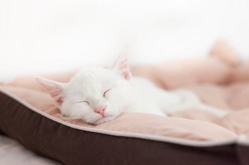 Mixed-Breed Cat「cute white young sleeping cat」:スマホ壁紙(7)