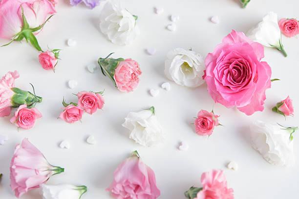 Pink roses on white background:スマホ壁紙(壁紙.com)