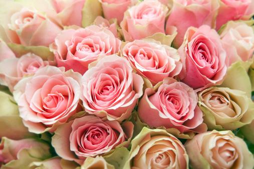 母の日「ピンクのバラます。」:スマホ壁紙(3)