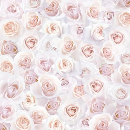 花「Pink Roses」:スマホ壁紙(17)