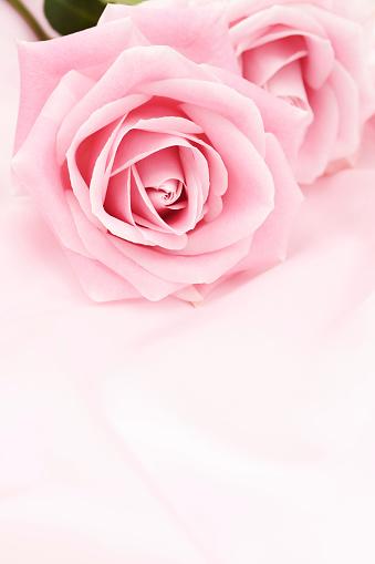 バレンタイン「ピンクのバラ」:スマホ壁紙(13)