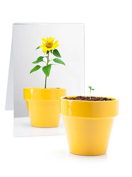 植物のミラー:スマホ壁紙(壁紙.com)
