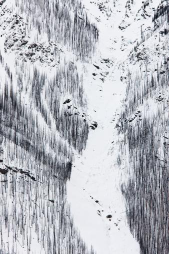 Yoho National Park「Hillside of burnt trees near Field, Yoho National Park in the Canadian Rockies, Canada」:スマホ壁紙(8)