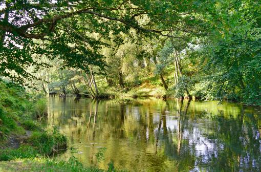 アーン川「River Earn in summer, with reflections」:スマホ壁紙(1)