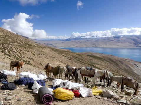 Pack Animal「Pack animals bringing equipment and supplies to Base Camp for climbing team, Mentok Kangri (6250 metres), Ladakh, India. Tso Moriri (or Lake Moriri) lies at the foot of the mountain.」:スマホ壁紙(13)
