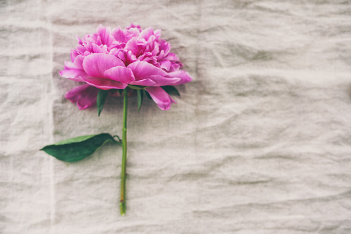 Girly「素朴な布の背景に牡丹の花」:スマホ壁紙(0)