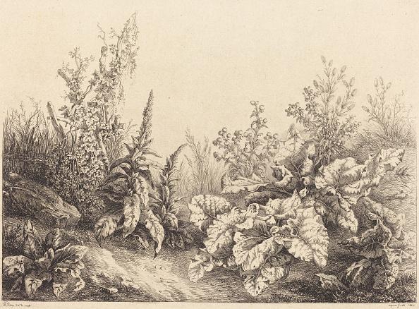 Composition「Study Of A Burdock」:写真・画像(9)[壁紙.com]
