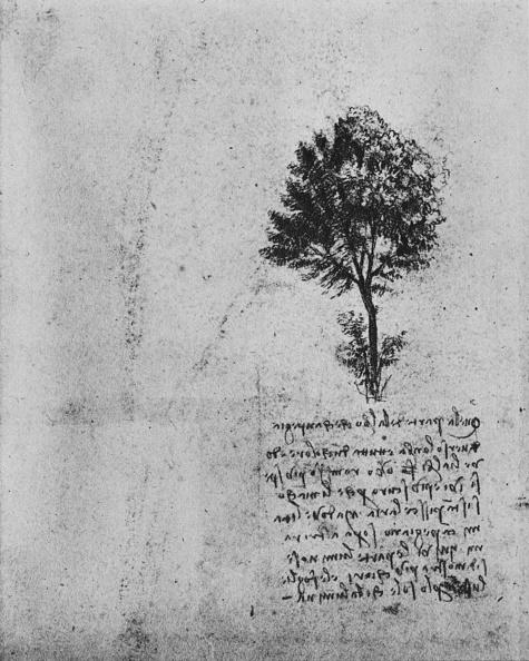 Writing「'Study of a Tree', c1480」:写真・画像(19)[壁紙.com]