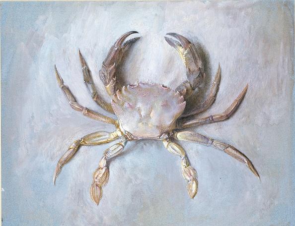 Animal Body Part「Study Of A Velvet Crab」:写真・画像(7)[壁紙.com]