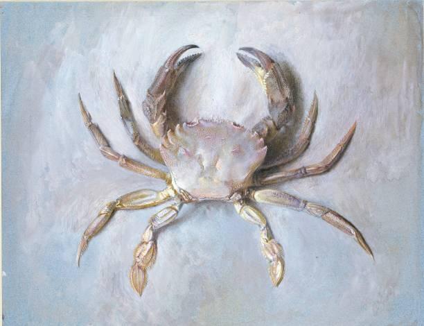 Study Of A Velvet Crab:ニュース(壁紙.com)