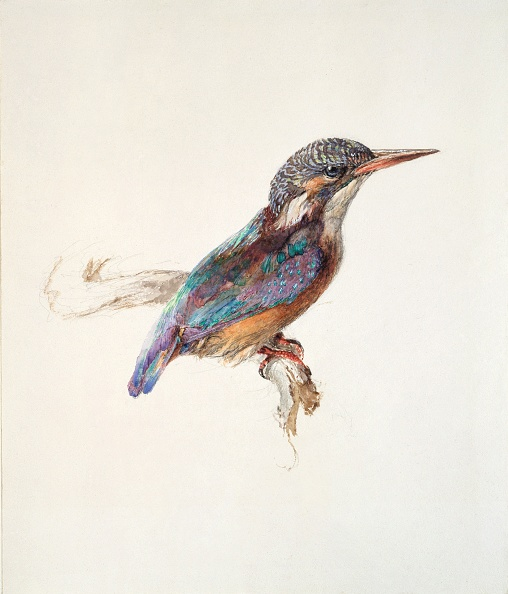 October「Study Of A Kingfisher」:写真・画像(11)[壁紙.com]