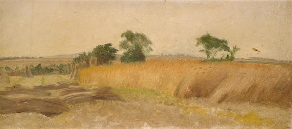 イネ科「Study Of A Cornfield」:写真・画像(9)[壁紙.com]