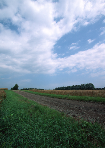 Grove「Field」:スマホ壁紙(12)