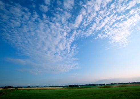巻積雲「Field」:スマホ壁紙(0)