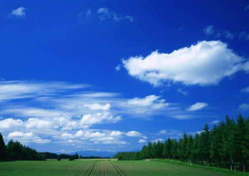 Hokkaido「Field」:スマホ壁紙(13)