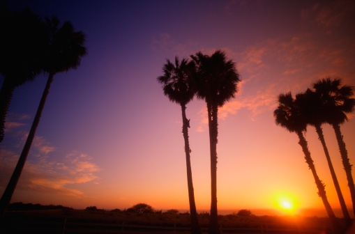 Frond「Beautiful exotic sunset」:スマホ壁紙(16)
