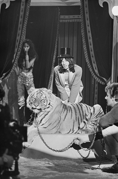 animal「Jagger And Tiger」:写真・画像(14)[壁紙.com]