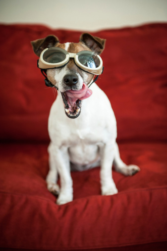 Flying Goggles「Dog with goggles and tongue sticking out」:スマホ壁紙(9)