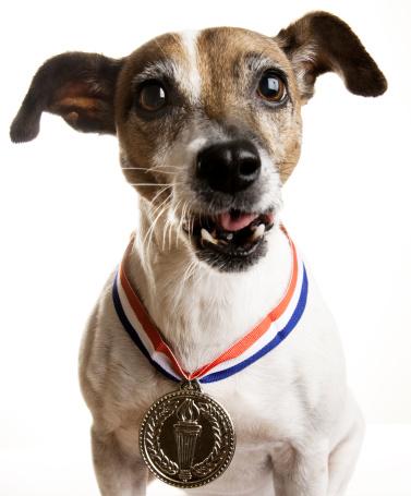Three Quarter Length「Dog with Gold Medal」:スマホ壁紙(7)