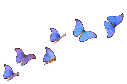 Mid-Air「Blue Morpho Butterfly Banner」:スマホ壁紙(12)