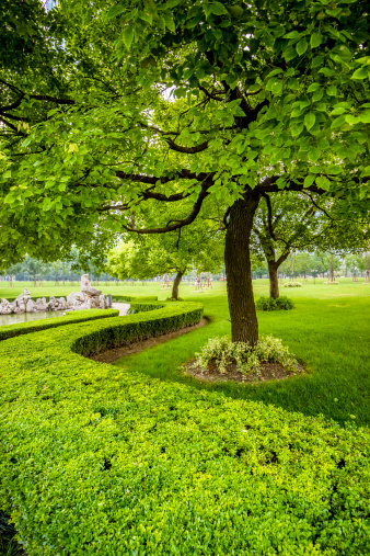 Surrounding「green trees」:スマホ壁紙(14)
