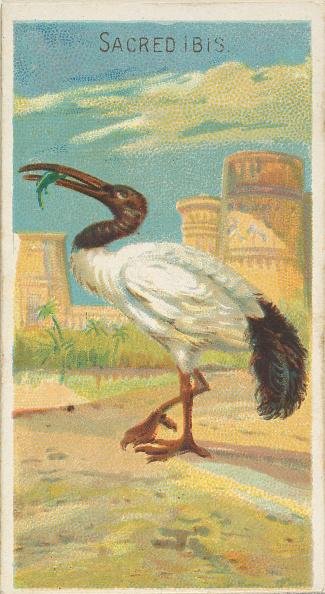 Beak「Sacred Ibis」:写真・画像(19)[壁紙.com]