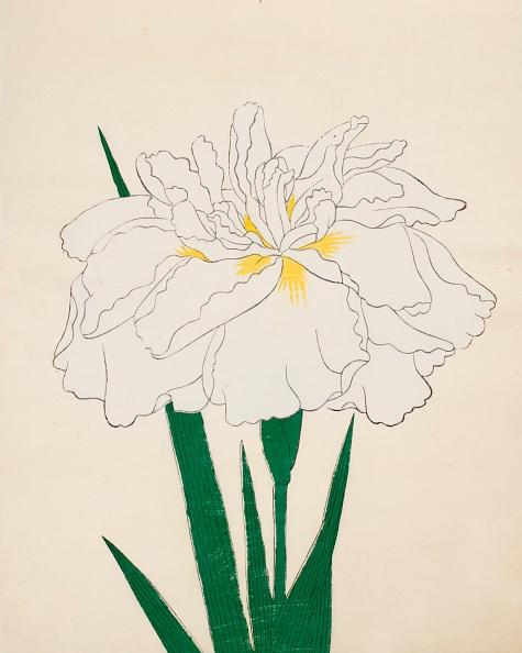 Perennial「Ujaku-No-Nagisa」:写真・画像(17)[壁紙.com]