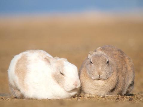 うさぎ「Two Rabbits」:スマホ壁紙(2)