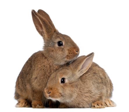 Baby Rabbit「Two rabbits」:スマホ壁紙(15)