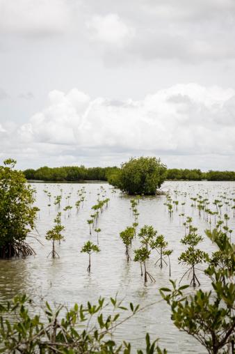 Shallow「Replantation of mangroves」:スマホ壁紙(11)