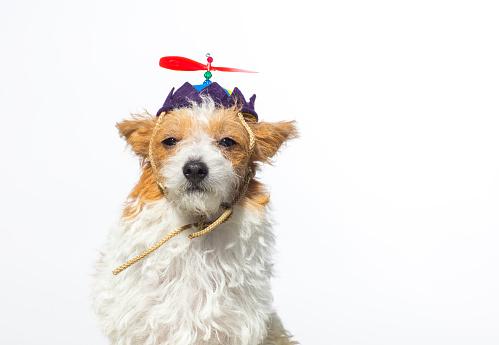 杏「プロペラの帽子とかわいい犬」:スマホ壁紙(15)