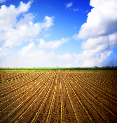 Planting「Corn field and blue sky over horizon.」:スマホ壁紙(1)