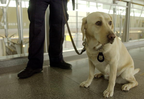 Kennedy Airport「Canine Teams Demonstrate Explosives Detection At JFK」:写真・画像(18)[壁紙.com]