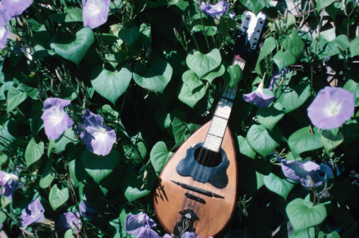 朝顔「Mandolin or lute among morning-glory flowers」:スマホ壁紙(2)