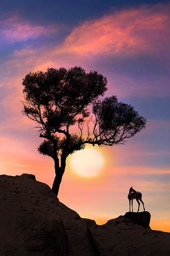 Gazelle「Silhouette of deer is standing near the tree at Sunset」:スマホ壁紙(19)
