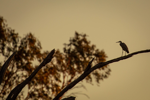 The Nature Conservancy「Silhouette of a heron at Sunset on the Balonne River, St George Queensland」:スマホ壁紙(1)