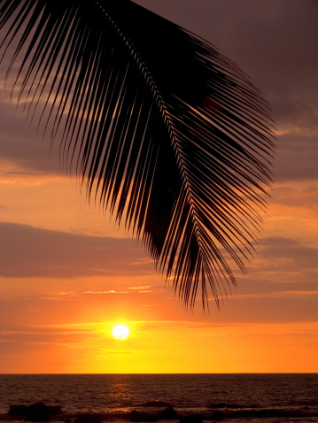 Frond「Silhouette of palm frond over the ocean as sun sinks into the horizon.」:スマホ壁紙(3)