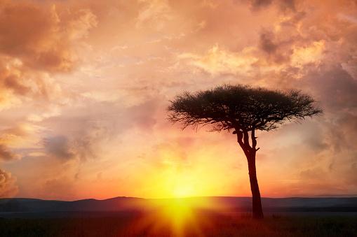 Single Tree「Silhouette tree at sunset」:スマホ壁紙(14)